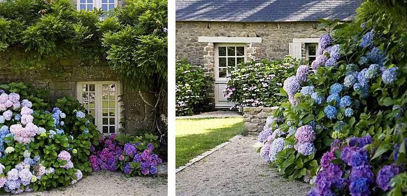 Hortensias, grandes flores para decorar el jardín - http://www.decoora.com/hortensias-grandes-flores-para-decorar-el-jardin.html
