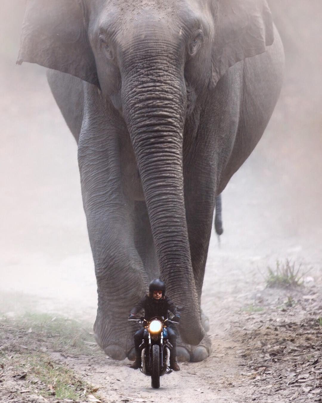 Rolling Thunder . . . . . . . motorcycleelephant