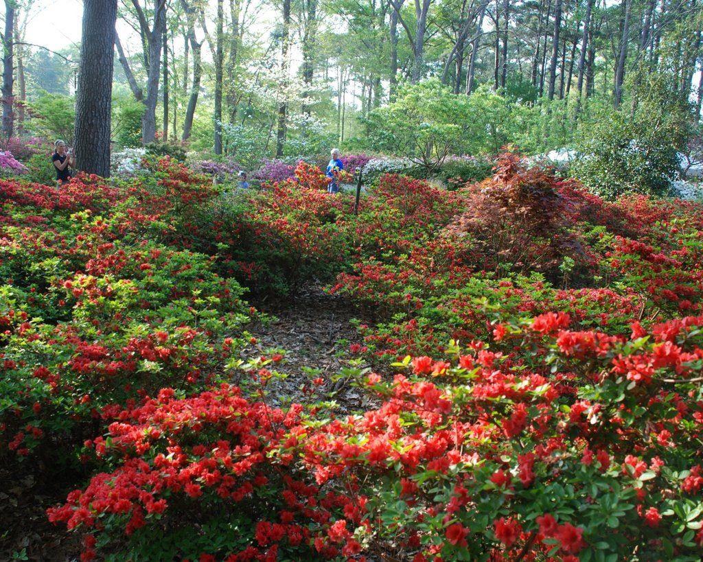 The Ruby Mize Azalea Gardens in Nacogdoches, Texas. | Texas ...