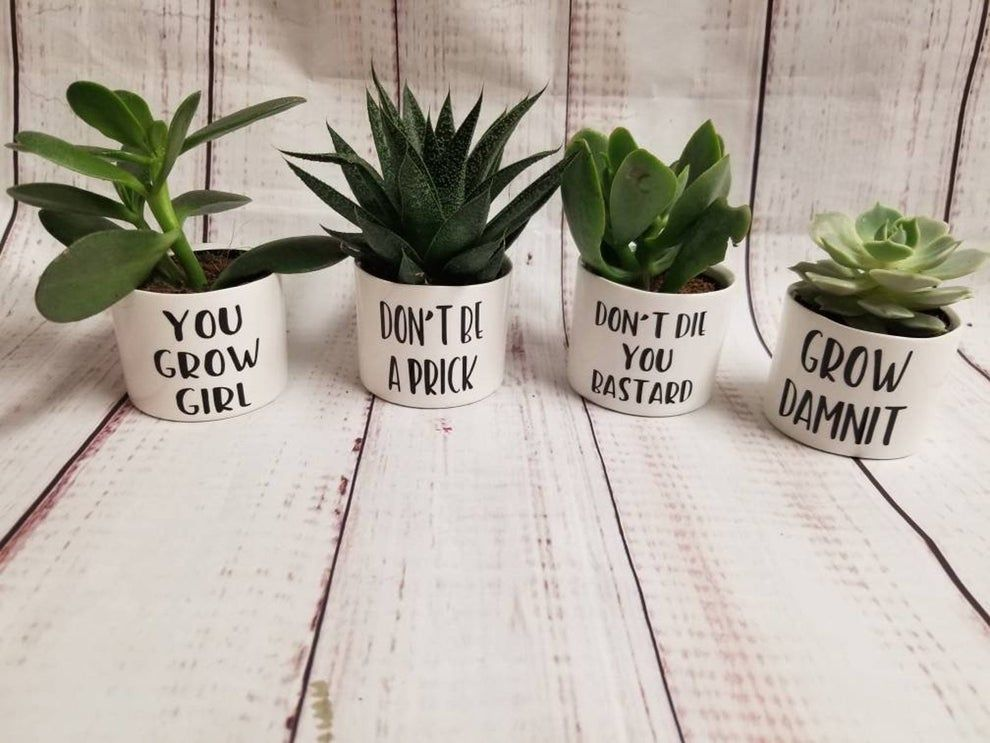 30 Things For Anyone Who Needs A Little Humor In Their Life Succulent Pots Ceramic Plant Pots Plants
