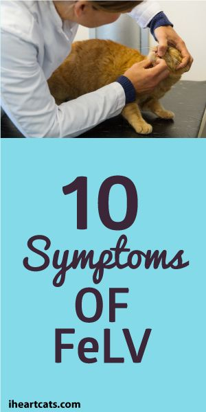 10 Symptoms Of Feline Leukemia Virus (FeLV)
