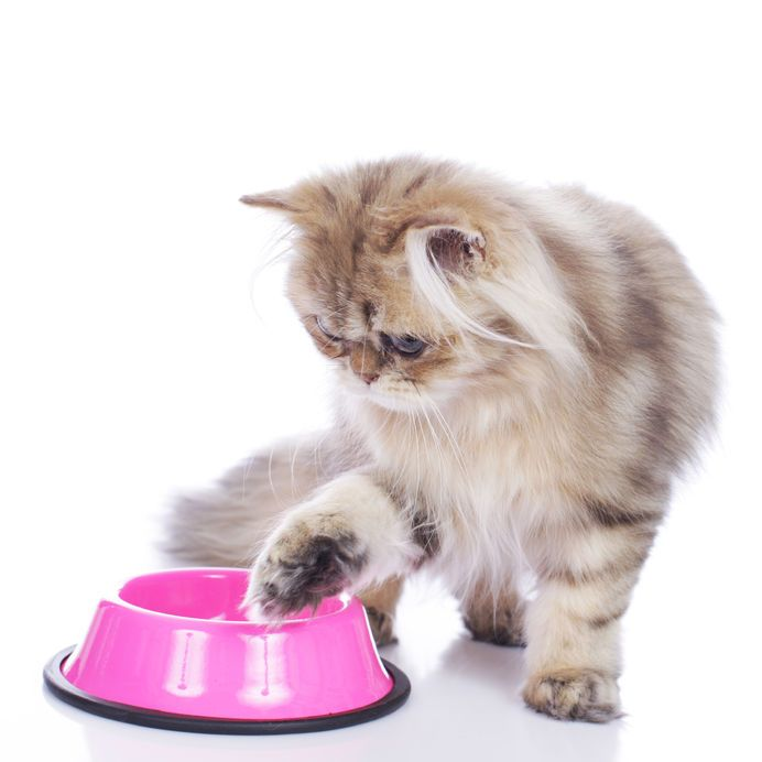 Cat parents often tell us that their cats won't eat
