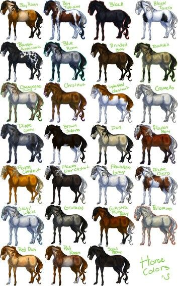 This Might Help Even Though It S Small And Hard To Read Horse Coat Colors Horse Breeds Horse Color Chart