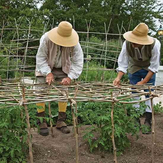 The Historic Art of Trellising - Organic Gardening - Heirloom Gardener