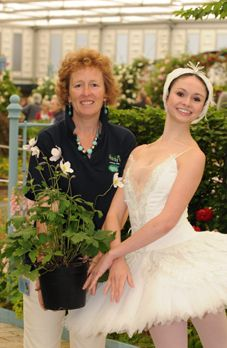 Ballerina with Rosy Hardy and Anemone Wild Swan at Chelsea Flower Show 2011