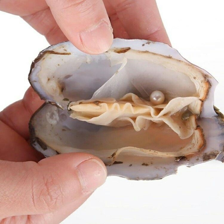 12+ Animal crossing pearl oyster images