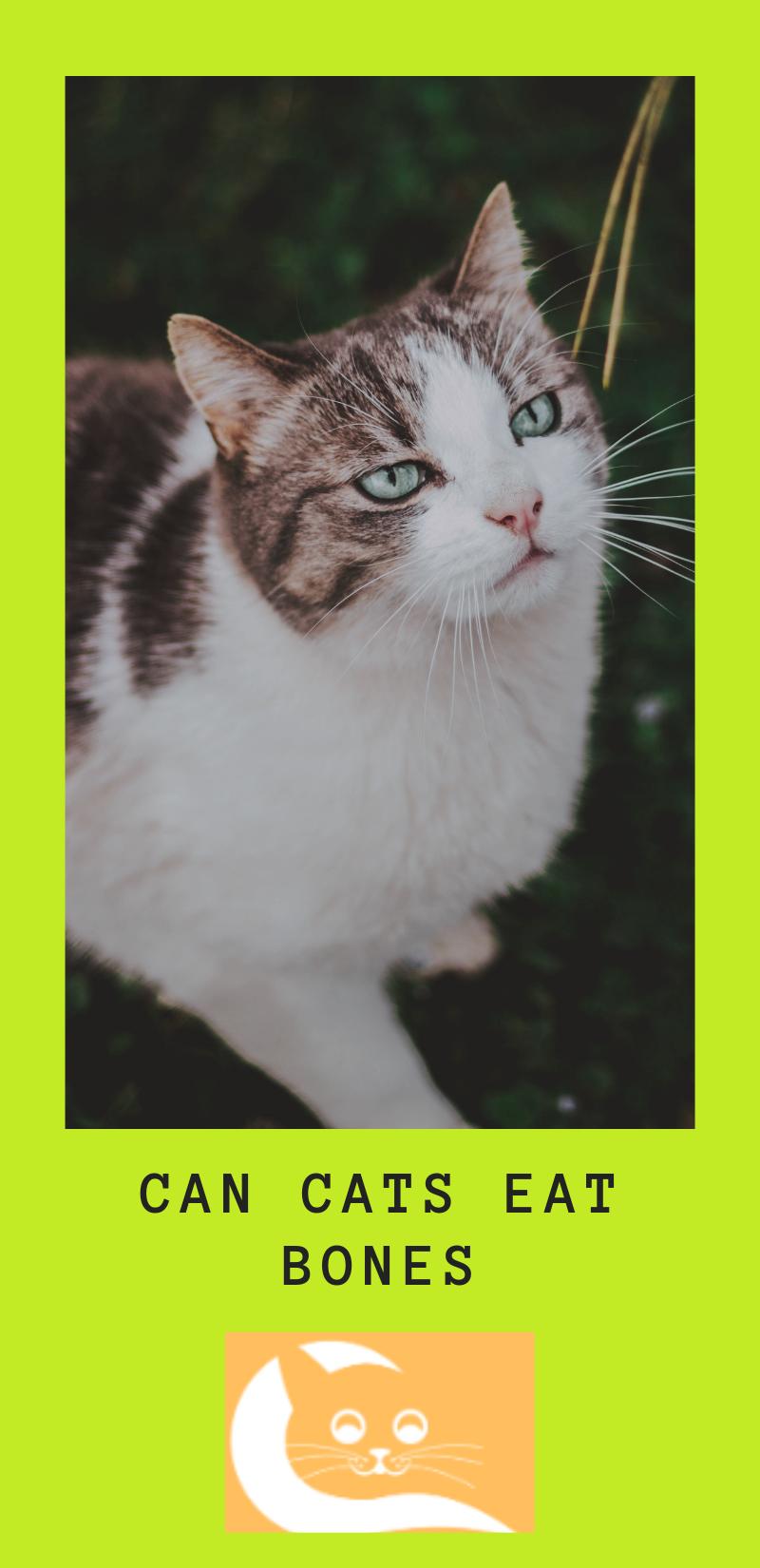 Can Cats Eat Bones Cats, Cat diet, Dog love