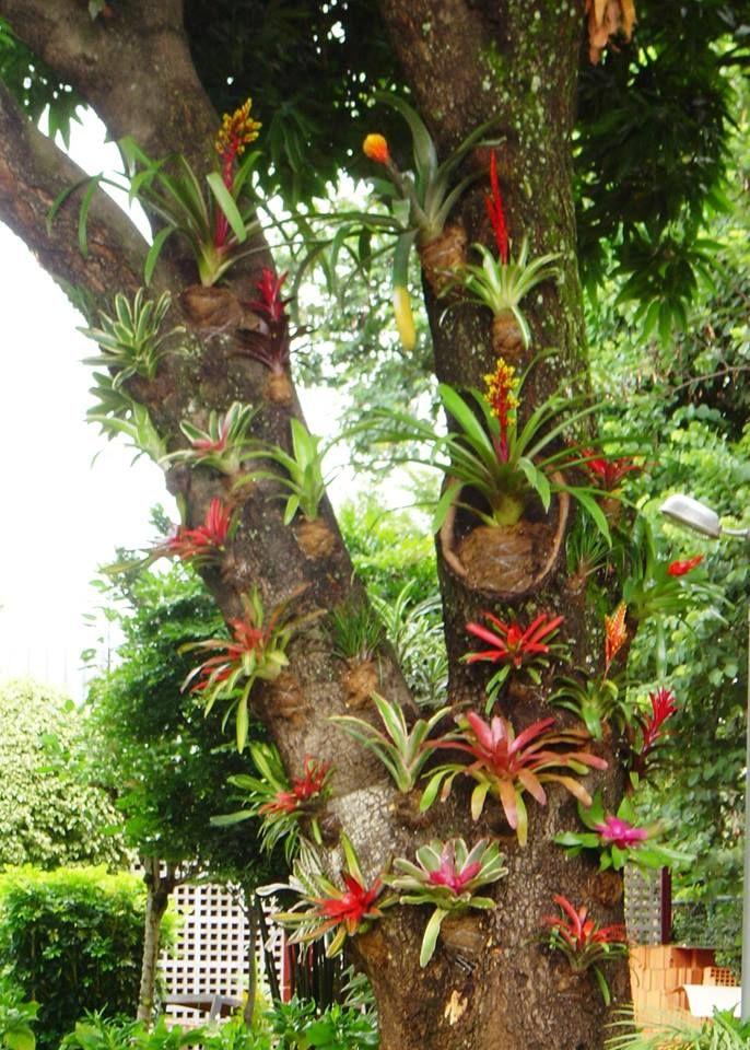 Bromélias | Bromeliads landscaping, Beautiful flowers garden, Bromeliads  garden
