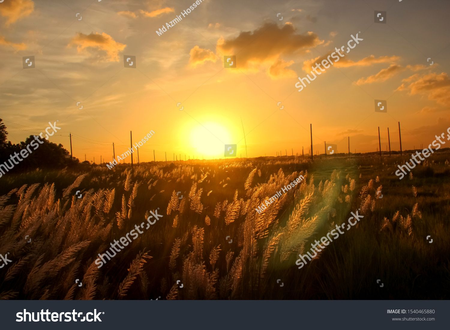 Beautiful Nature Sunset On The White Grass Field In The Summer With A Cloudy Sky Background Landscape Nature Selective Focus Beautiful Nature Sunset Nature Hd wallpaper nature reeds grass sunset