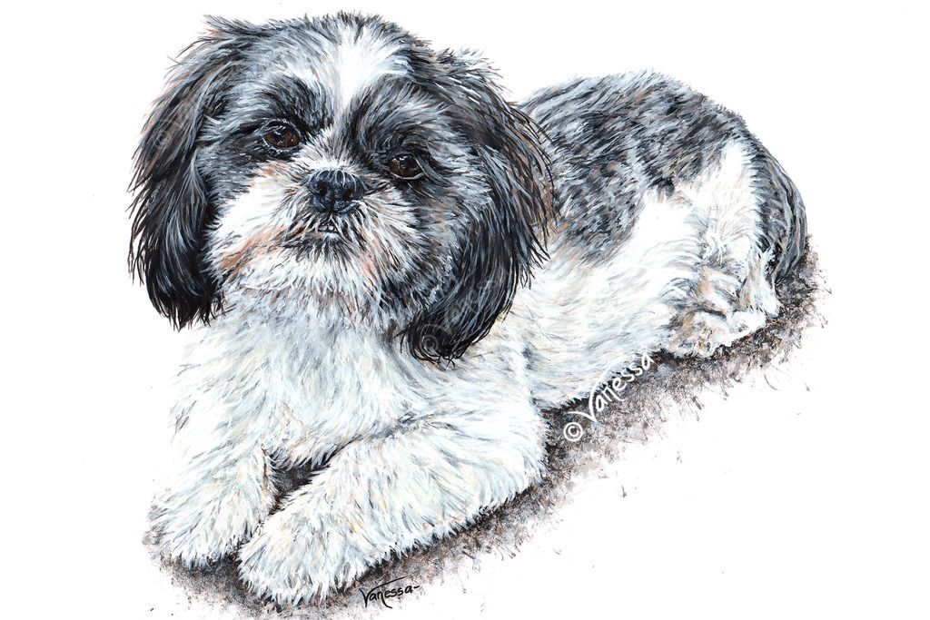 Commission work - Pet Portraits by Vanessa Grundy - Painting of Elsie, the Shih Tzu. Completed in July 2015 using acrylic paints. Art by Vanessa Grundy Pet Portraits Dog