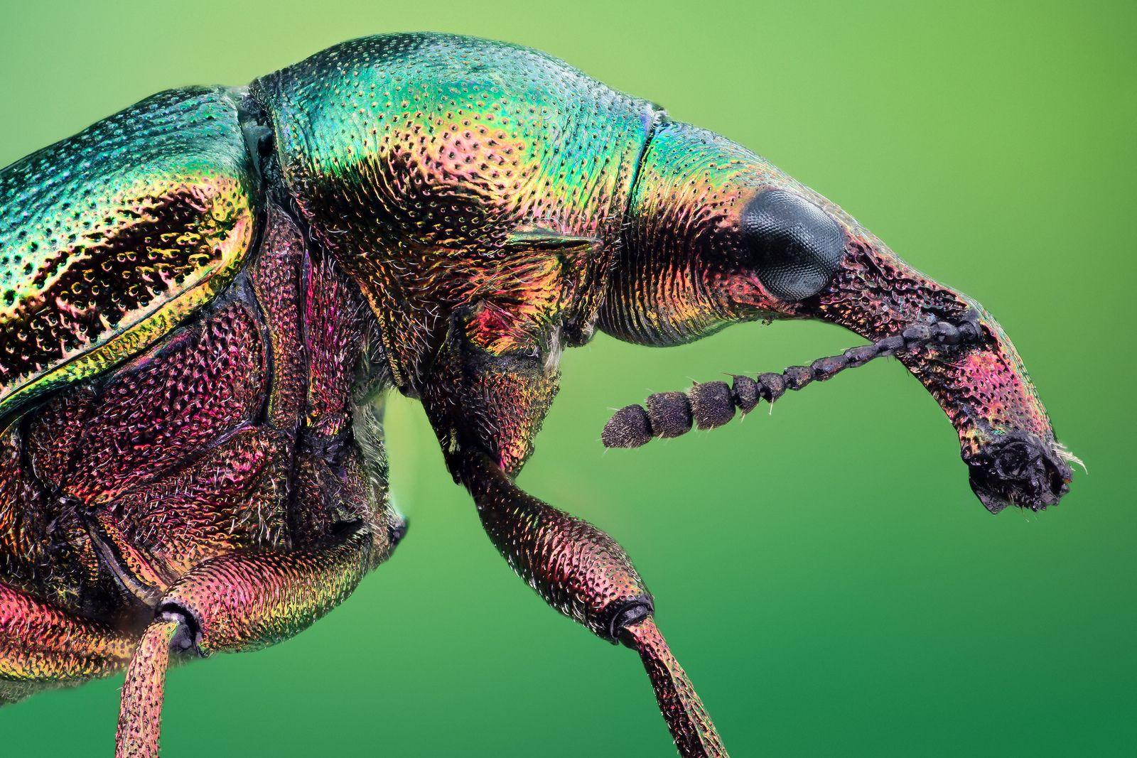 поиск жука по картинке