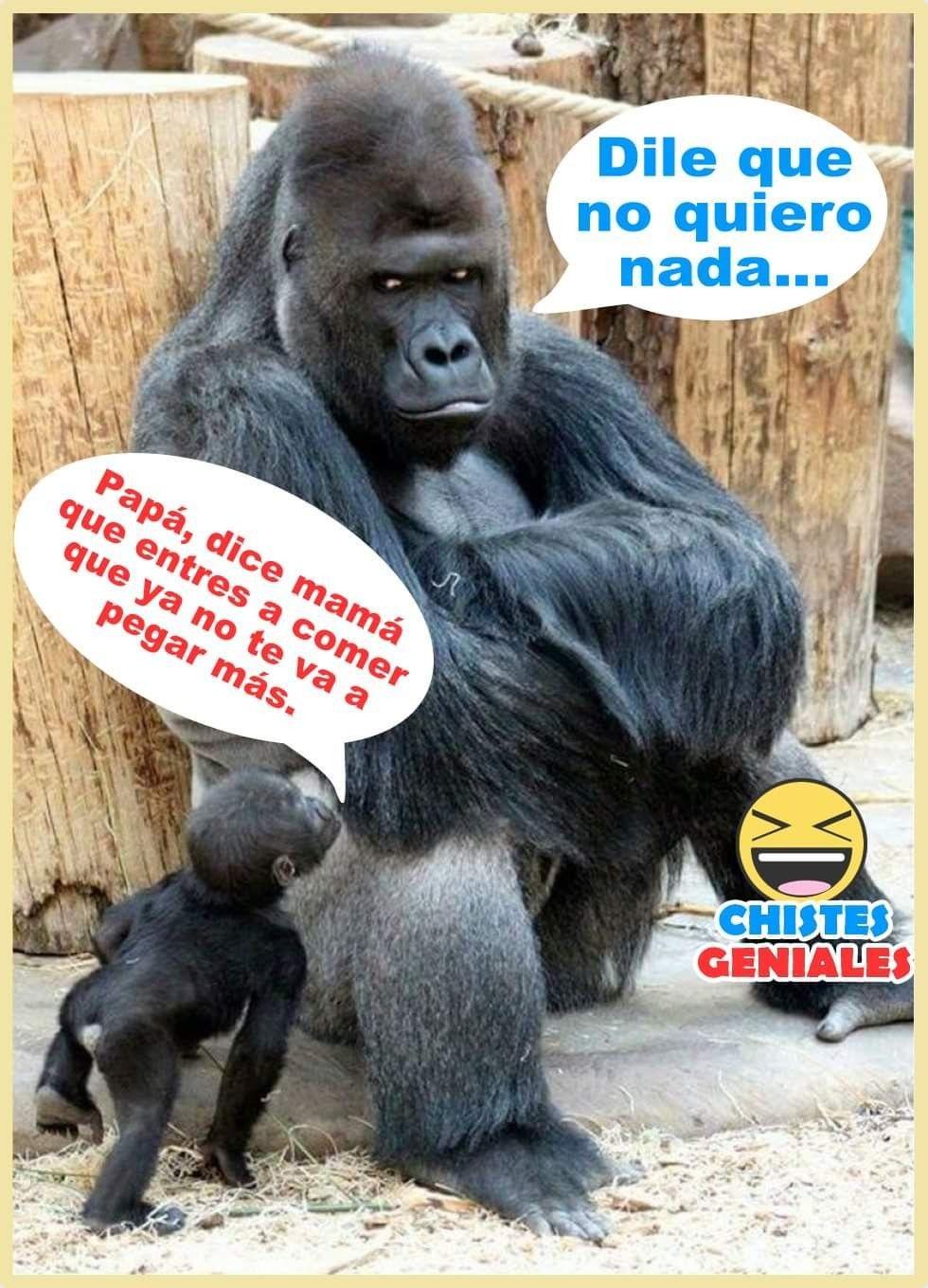 Pin By Marisol Villalba Fuentes On Meme Gracioso Funny Baby Memes Funny Memes Funny Babies