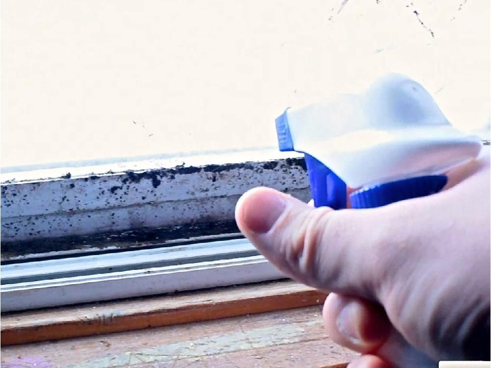 House Works How to fight mould and win Remove mold
