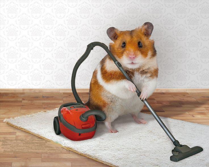 Posiblemente Animals Hamster Hmster Linda Visto Mas Foto Del Que Ms He Laposiblemente La Foto Mas Lin Susse Tiere Susse Tiere Bilder Niedliche Tiere