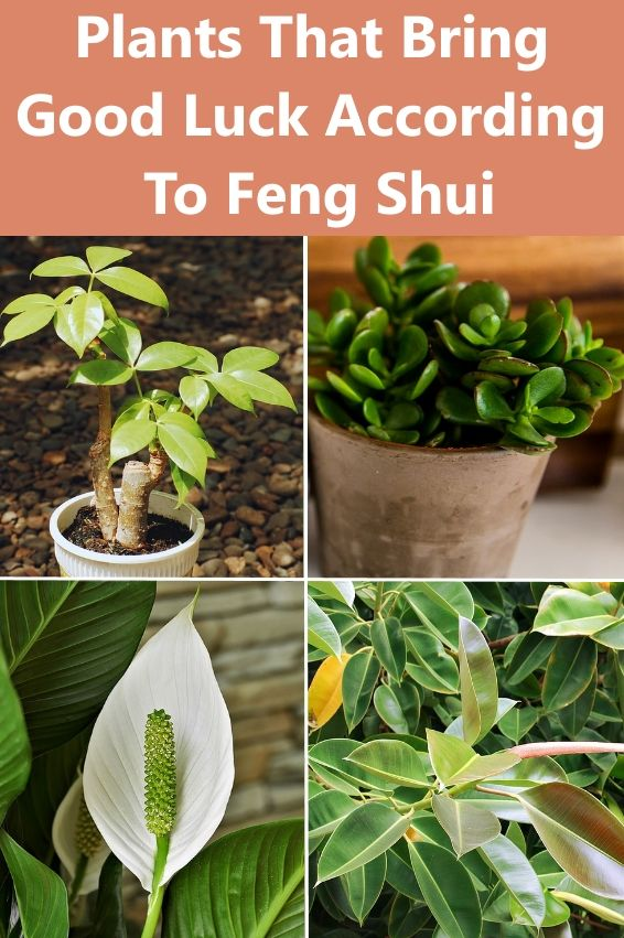 Plants that Bring Good Luck, Prosperity and Fortun