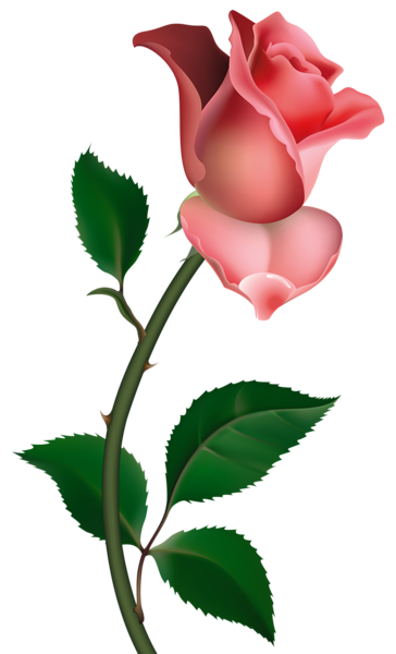 clipart rose png picture ru e pinterest rose clip art and flowers rh pinterest com single rose images clipart rose pictures clipart