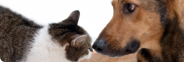 Low cost spay and neuter services Animals, Animal