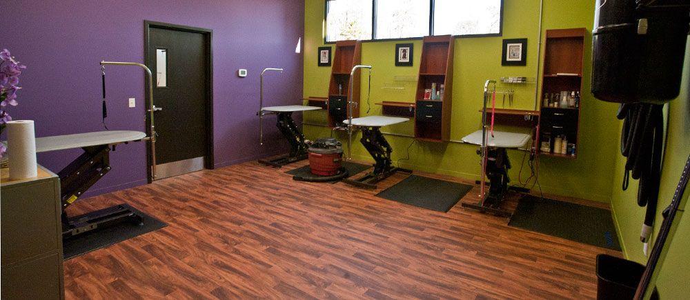 Groom Room Nice Colors Dog Grooming Salons Grooming Salon Dog Grooming Shop
