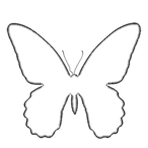 The Moment  Butterfly Models For Ben Sticker  Butterflies