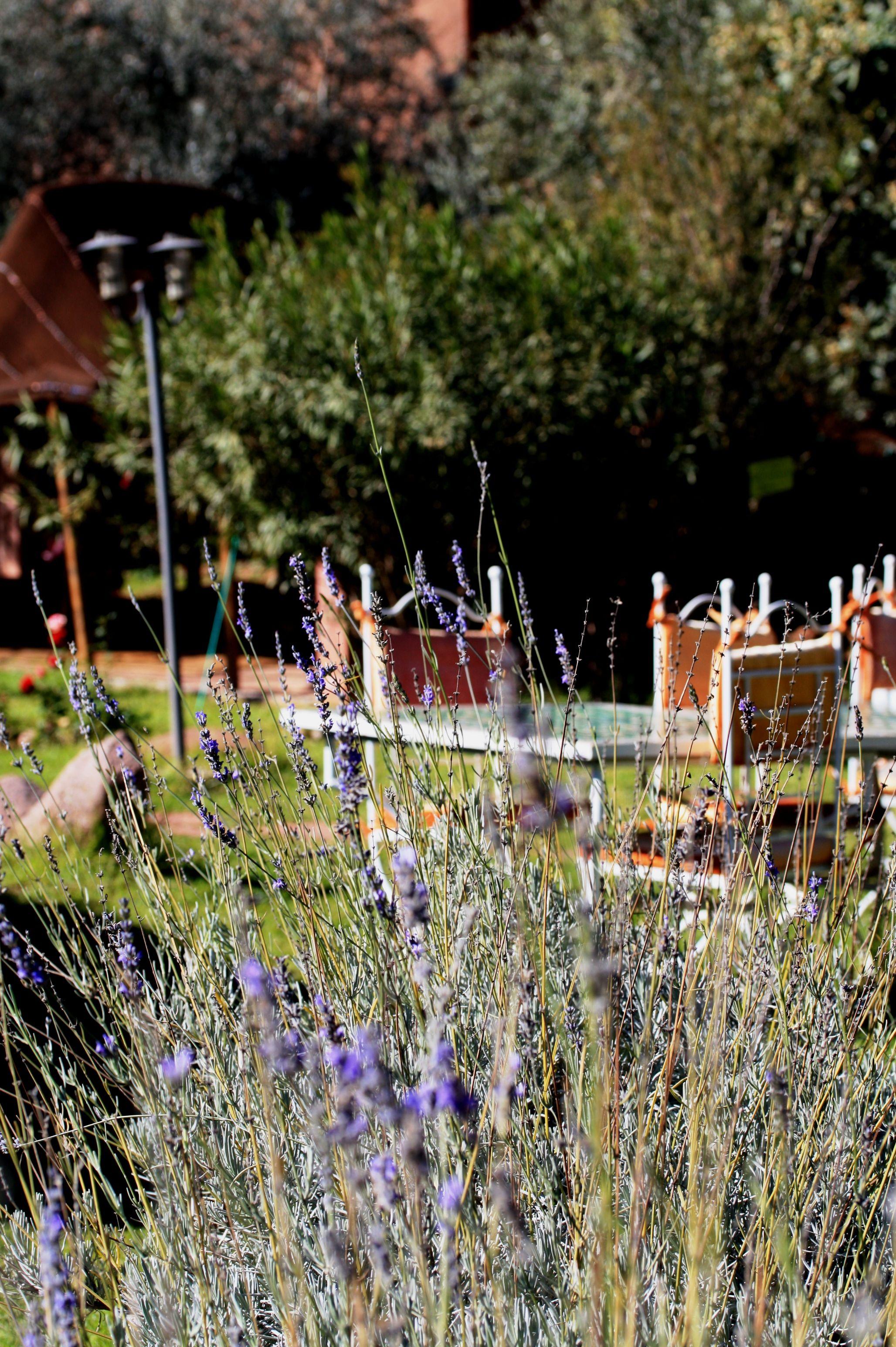 jardin bio aromatique dourika 35km de marrakech - Jardin Bio