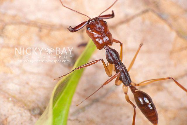 Pin By Veronika Loulova On Ants