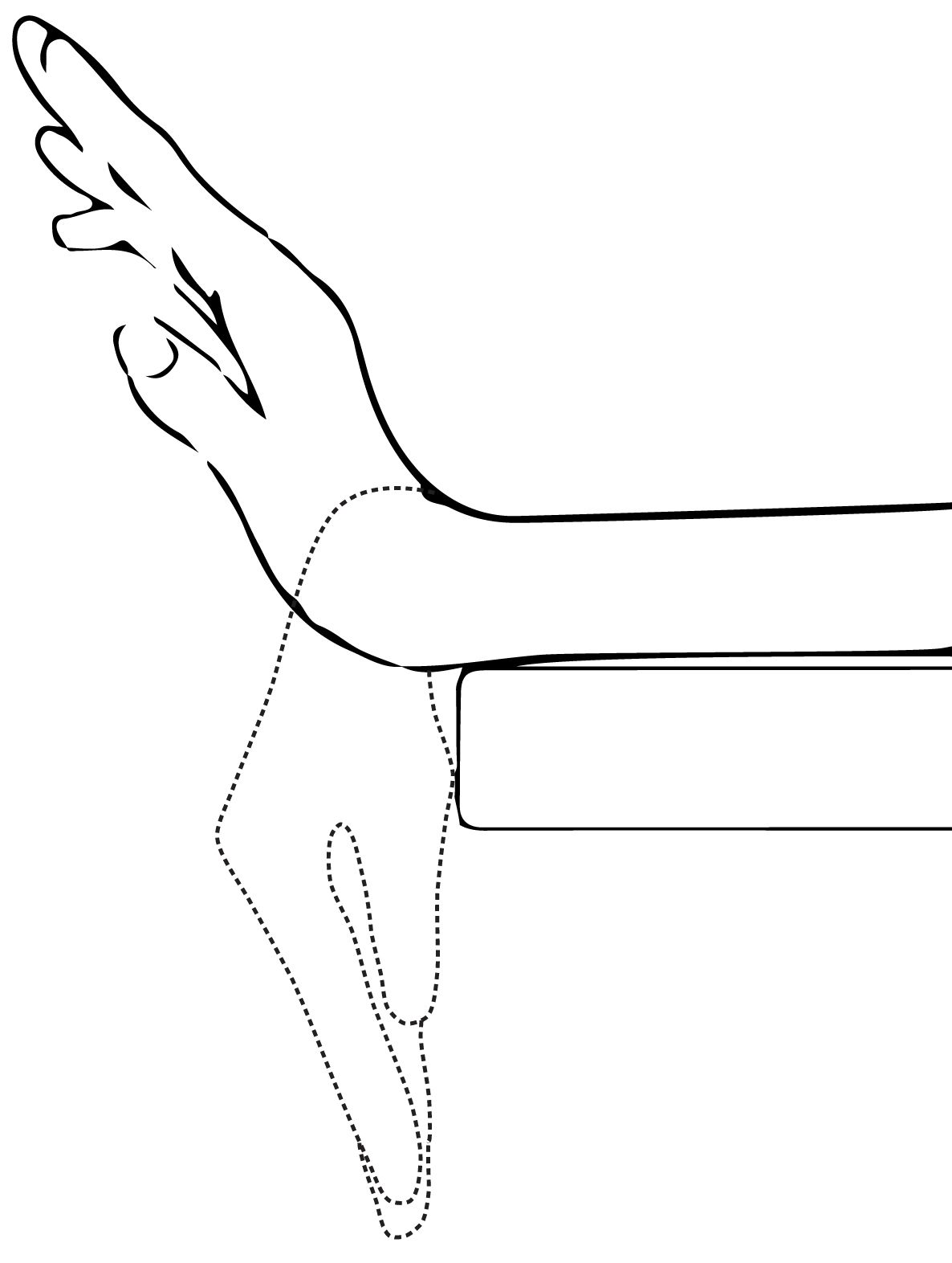 HB Hands Tendon Glide Exercises Ejercicios Hands