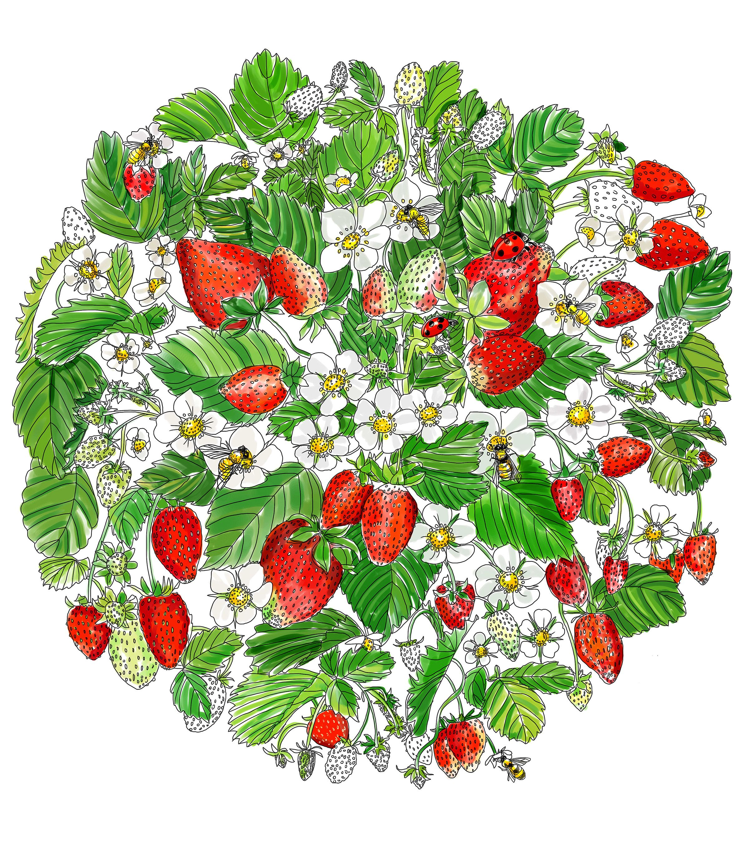A Printable Adult Coloring Page for Strawberry Lovers | Adult coloring