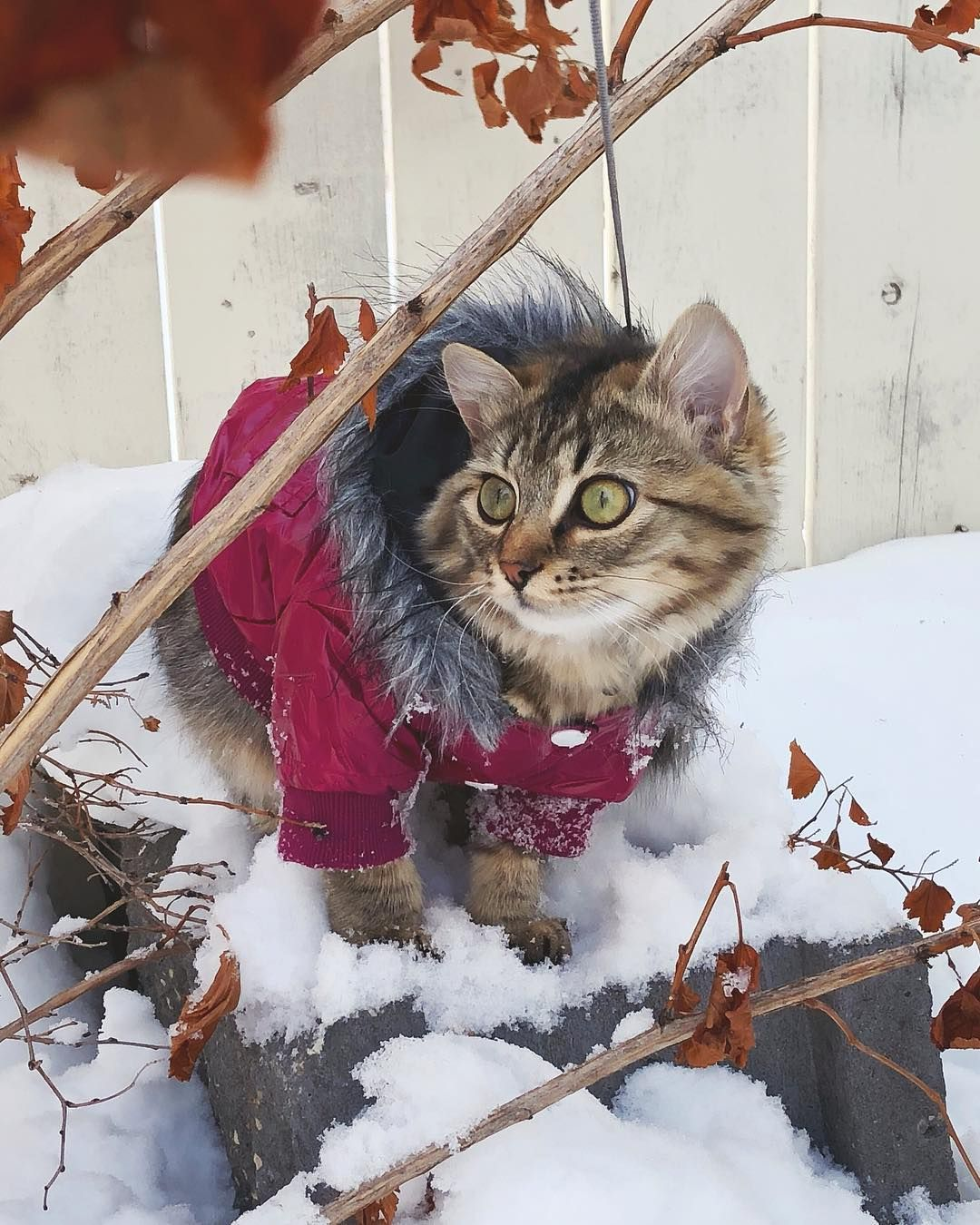 Animals Fashion 22 Animals With Unbelievable Coats