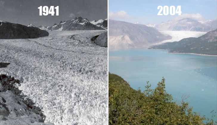 Glaciar Muir, Alaska. Agosto de 1941 - agosto de 2004.
