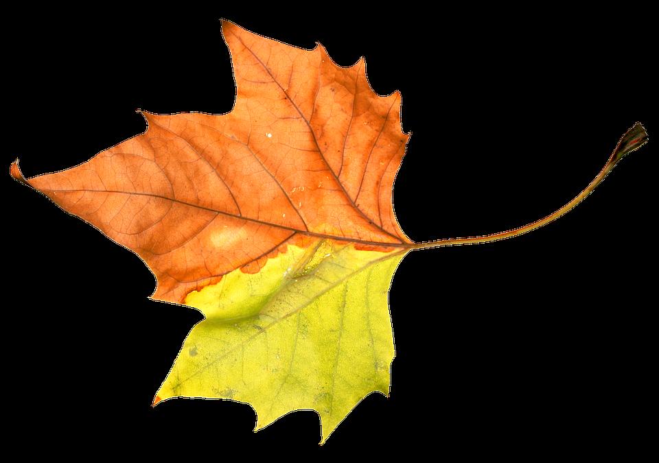 tube pour créas automne decor automne clic sur l'image