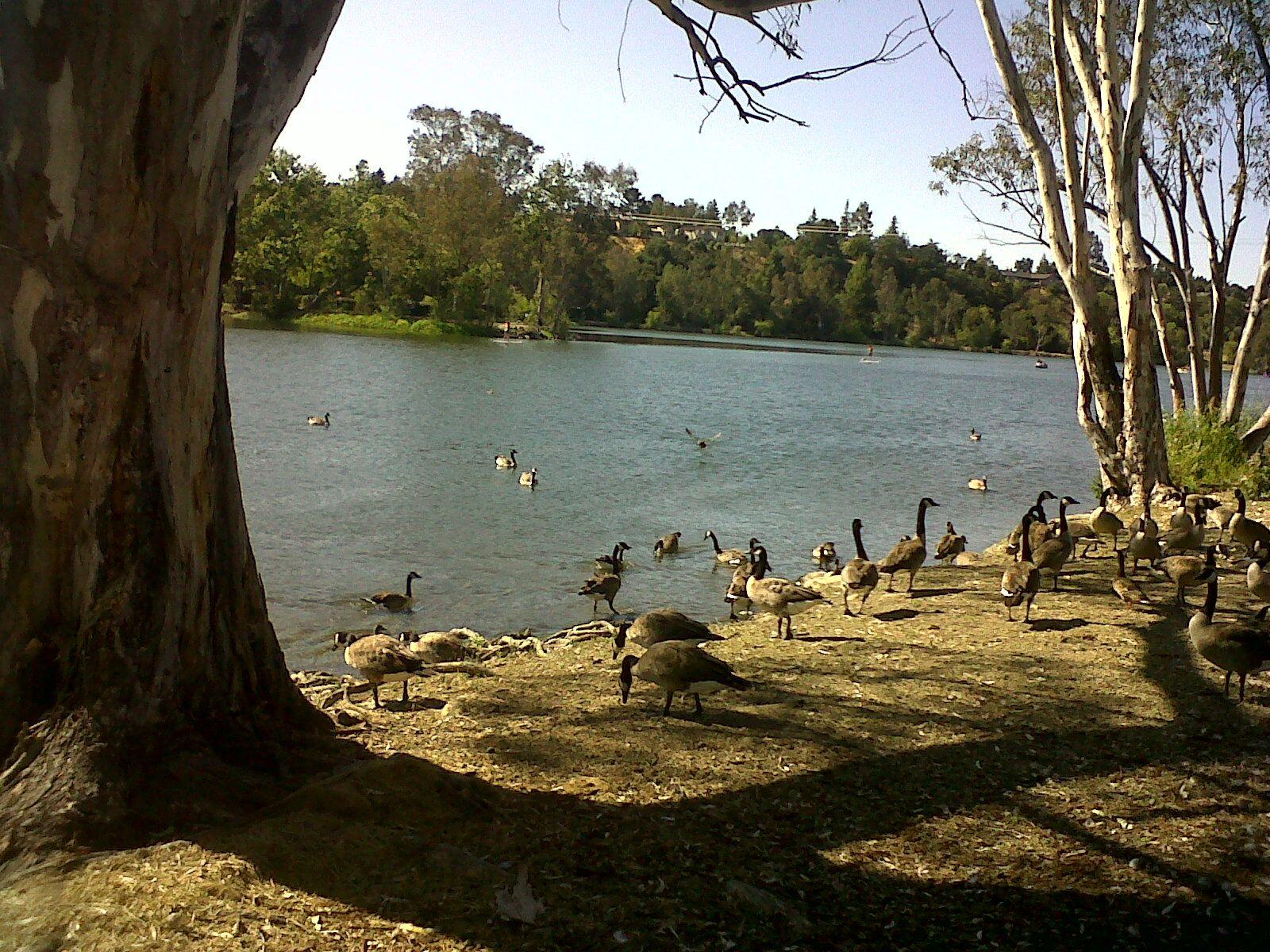 Camping World Kaysville >> Vasona Lake Park, Los Gatos summer 2012 | Los gatos ...