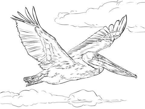 Pelícano Pardo Volando Dibujo para colorear | pájaros y aves en 2018 ...