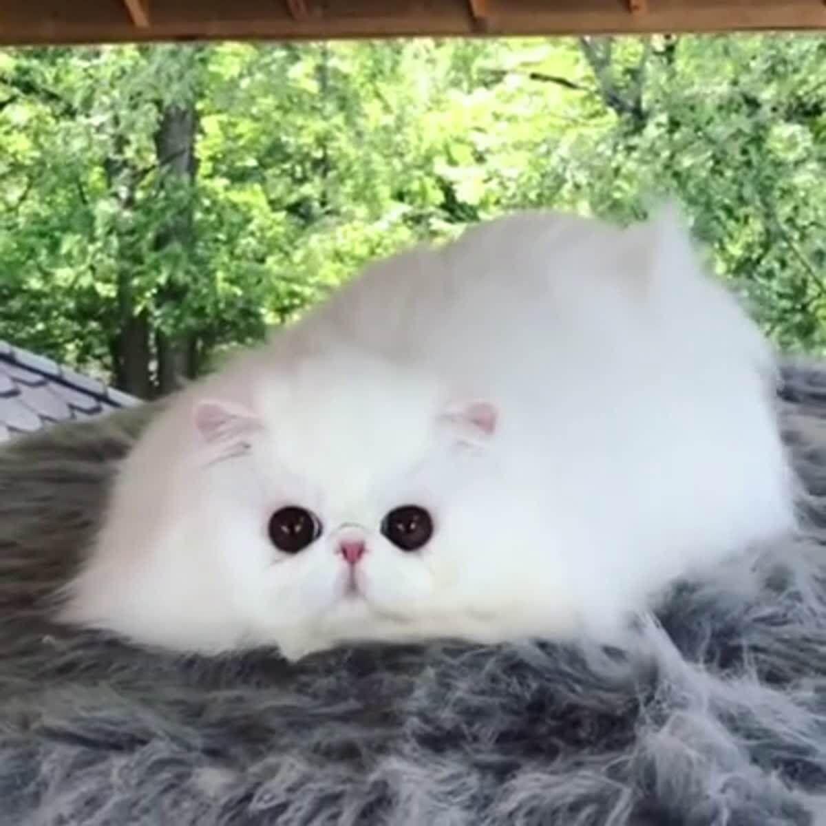 97% fluff, 3% eyes - LolSnaps