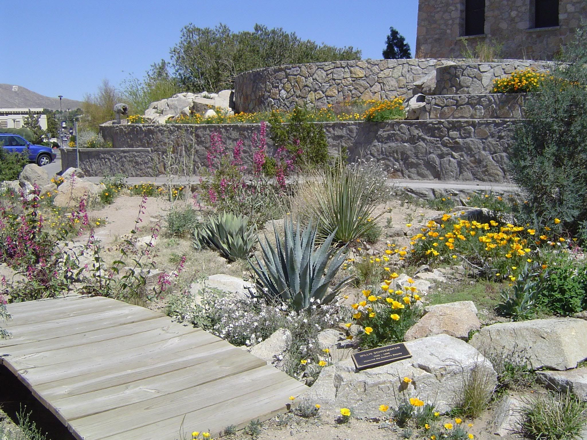 Perfect Chihuahuan Desert Garden Utep   Google Search