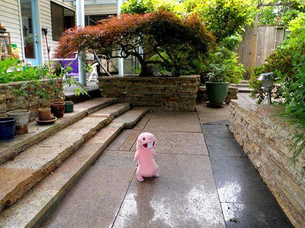 Cheap Landscaping Ideas For Back Yard My Garden Walk - Inexpensive backyard landscaping ideas