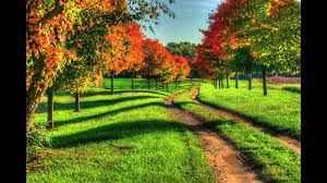 Image result for nature photography
