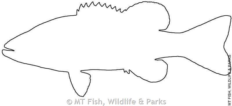 Outline Of Bass Fish Smallmouth Bass Outline Fish Outline
