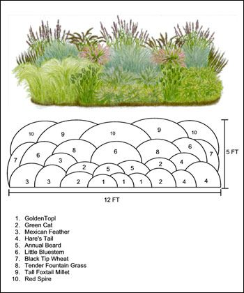 Ornamental grass ideas on pinterest ornamental grasses for Planting plans with grasses