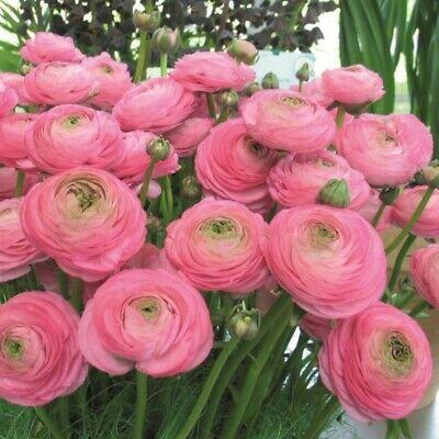 Pin On Floral Varieties