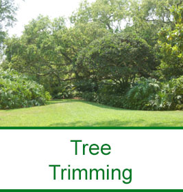 Jimmys Tree Service 1 company offers the Best Certified
