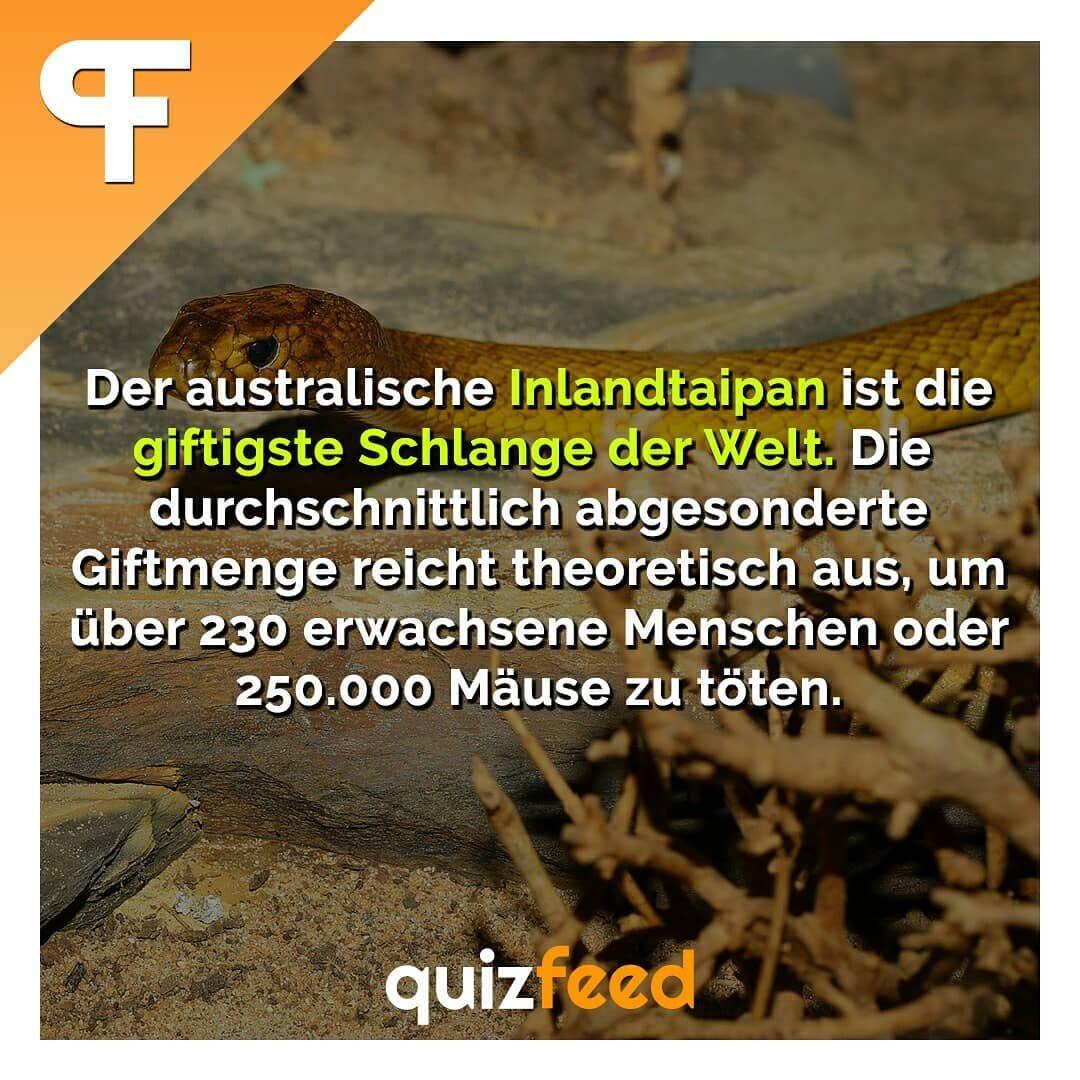 Der Australische Inlandtaipan Ist Die Giftigste Schlange Der Welt Die Durchschnittlich Abgesonderte Giftmenge Reicht Theor Giftschlange Giftige Schlangen Quiz