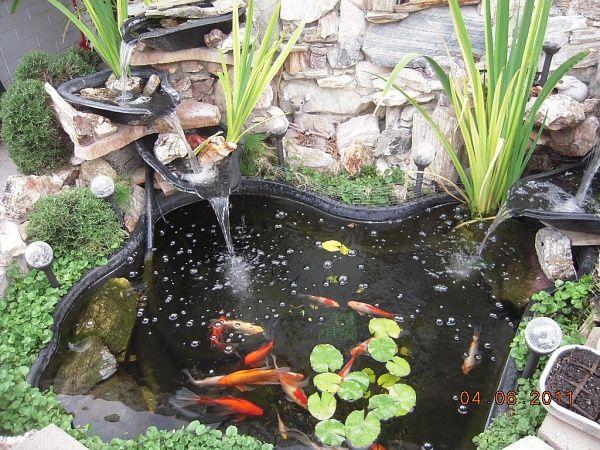 i want a fish pond Water feature Pinterest Mi mundo, Agua y Verde