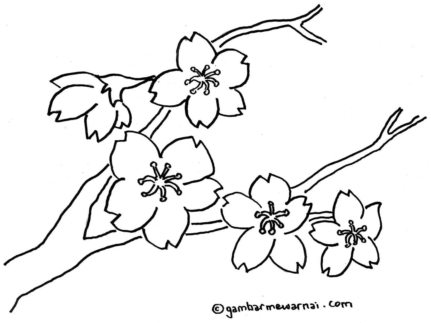 Kumpulan Contoh Gambar Sketsa Bunga Sakura Berwarna