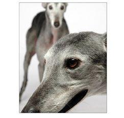 Greyhound Google Search Grey Hound Dog Greyhound Greyhound Pictures