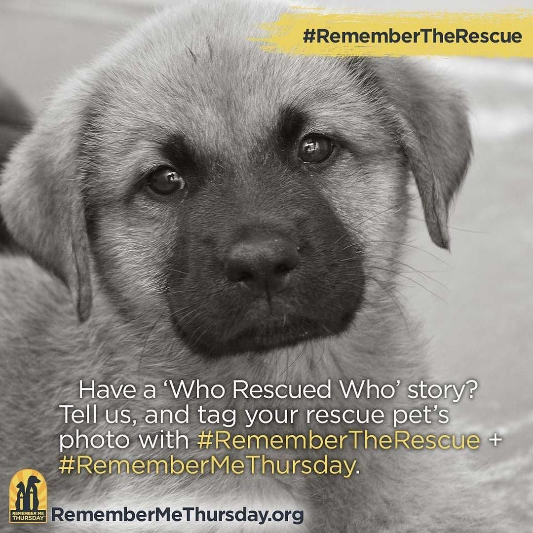 Do You Have A Who Rescued Who Story Let Us Know In The Comments Below Remembermethursday Dog Dogs Dogsofin Lap Dogs Rescue Dogs Humane Society
