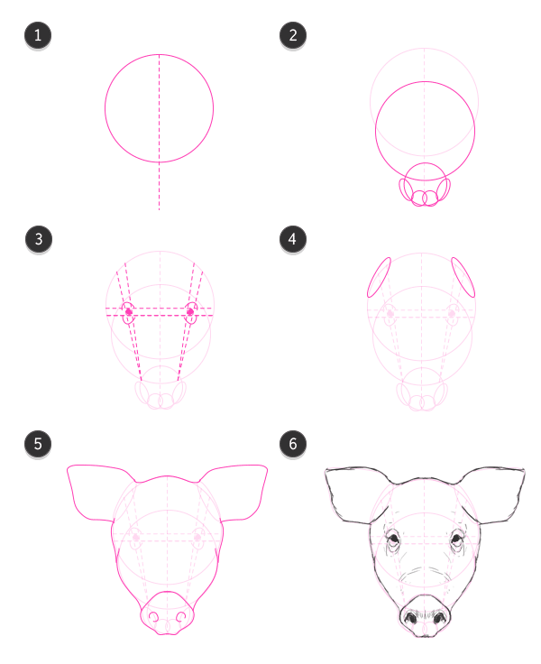 How to draw pig head front