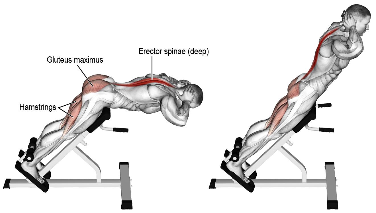 comment effectuer les relev de lombaires anatomie musculation dos pinterest father. Black Bedroom Furniture Sets. Home Design Ideas