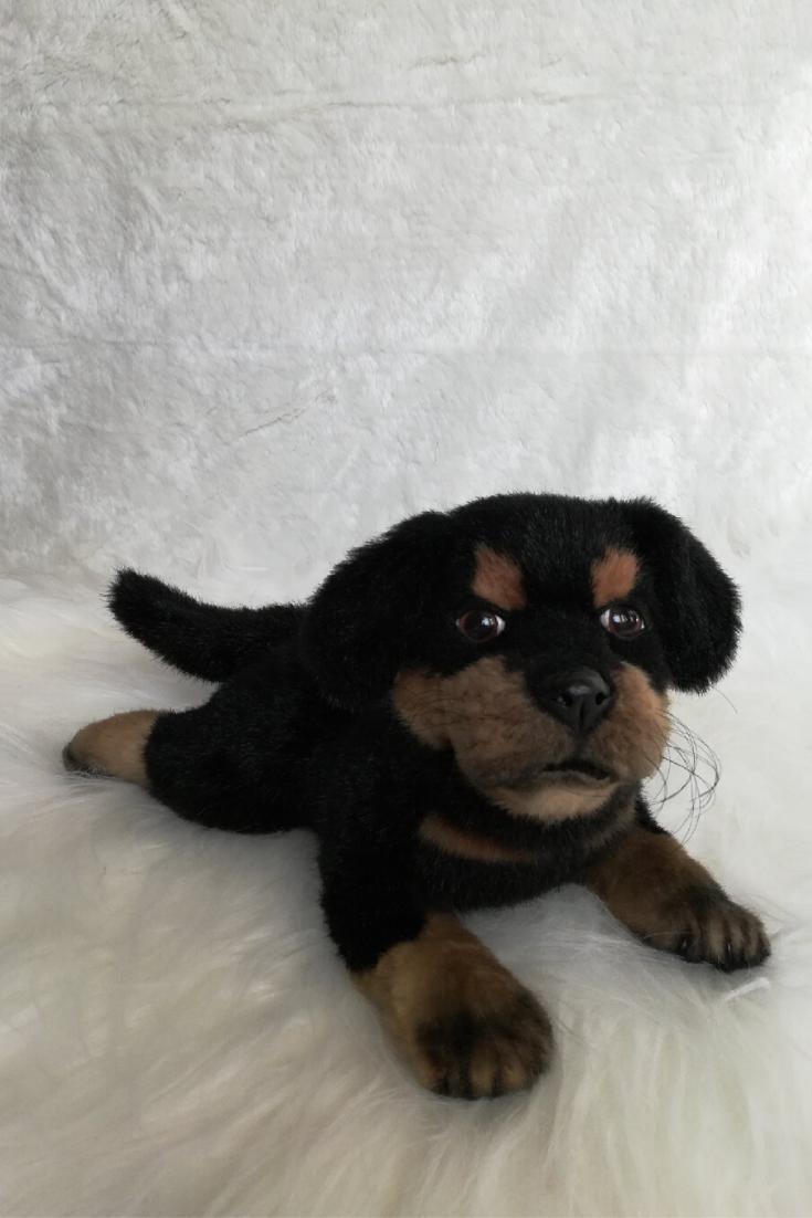 Realistic Soft And Plush Toy Dog Stuffed Rottweiler Replica Pet Plush Dog Toys Dog Toys Rottweiler [ 1102 x 735 Pixel ]