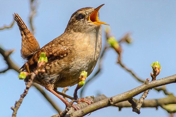 Pin Auf Birds