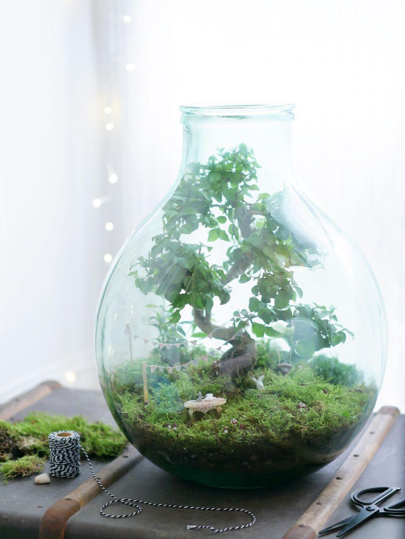 Do It Yourself Le Joli Jardin De Fees Succulents Terrerium